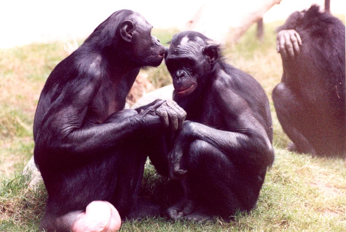 Сношение между разными видами животных и людей